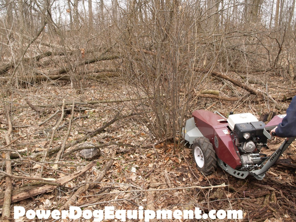 Early Spring Brush Mowing